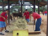 School Macuarima helps out at the donkey sanctuary Aruba